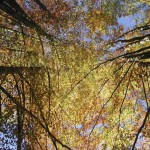 Reforestación Y Renovables, Vías Preferidas Para Neutralizar Emisiones De CO2